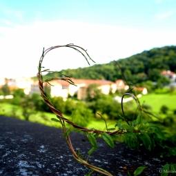 République tchèque - Une brindille qui vole
