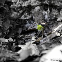 France - La petite fleur timide